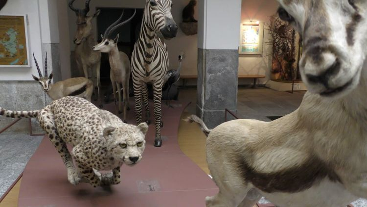 Museo di Storia Naturale Faraggiana Ferrandi Novara